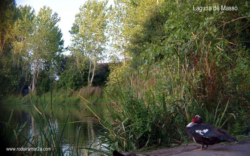 Aves en la Laguna de Massó