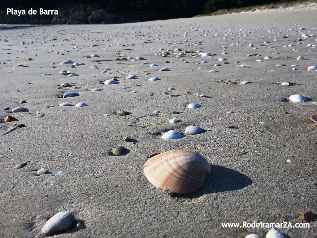 Ameixón. l a Playa de Barra con Conchas de almejas arrastradas después de un temporal