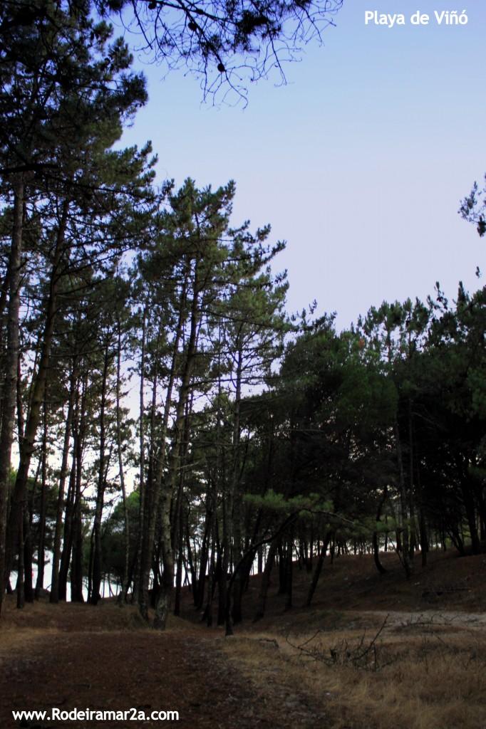 Playa de Viñó y el bosque de pinos