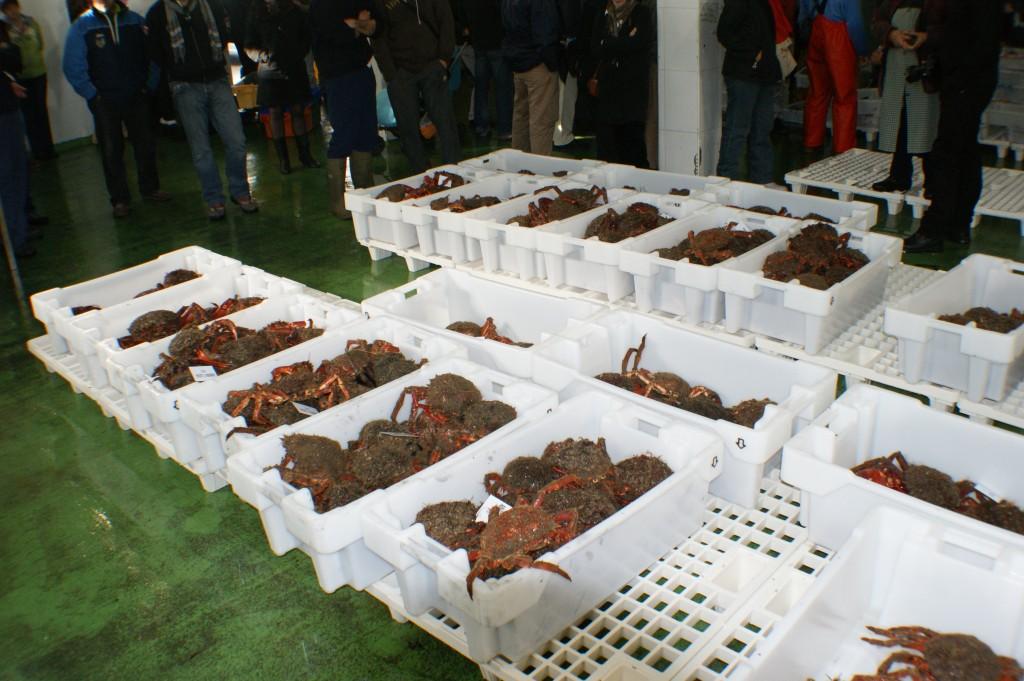 subasta de marisco en galicia