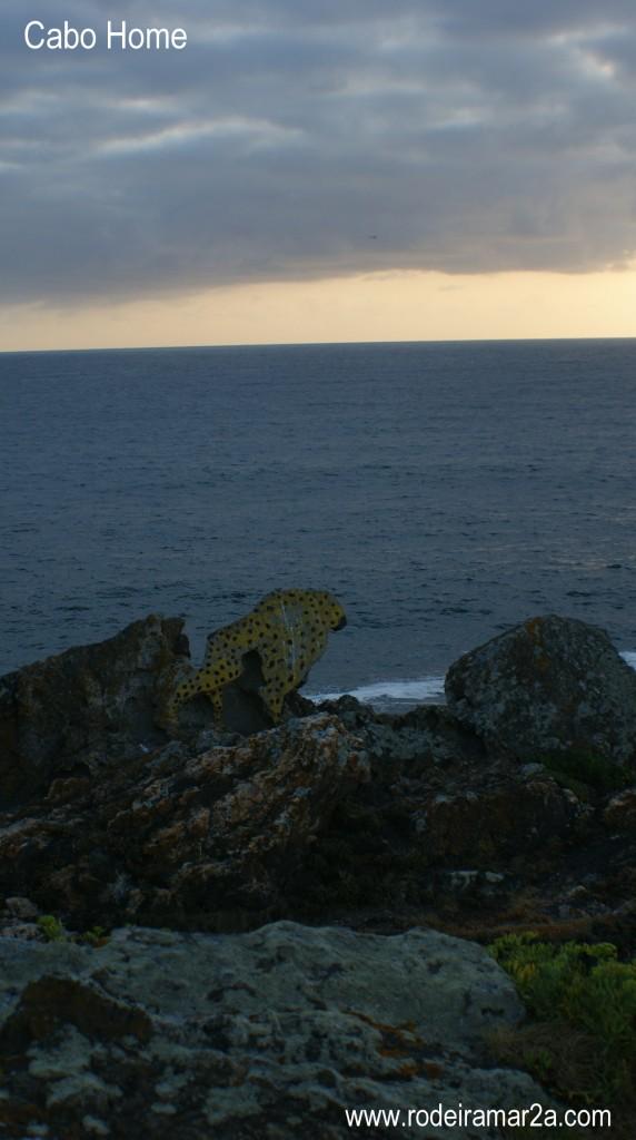 guepardo en cabo home 572x1024 - Cabo Home. Ruta por los Faros de Cabo Home, Playa de Melide y Playa de Barra. Costa de la Vela 2ª parte.
