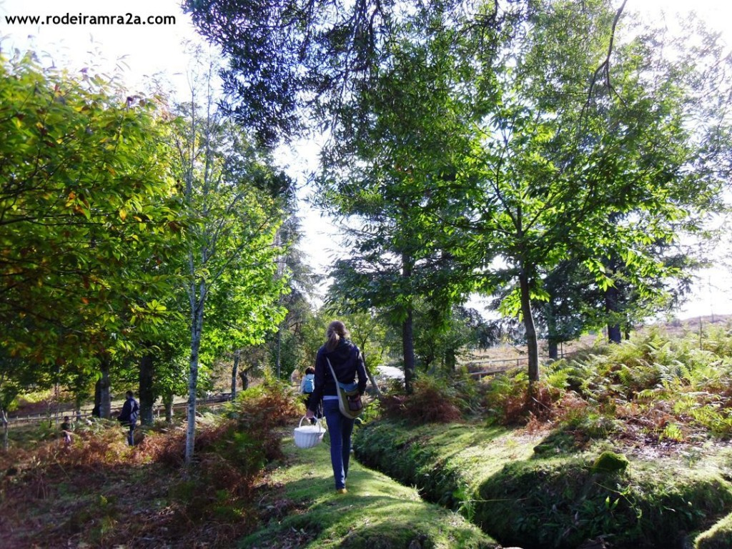 Paseos por el Lago de Castiñeiras