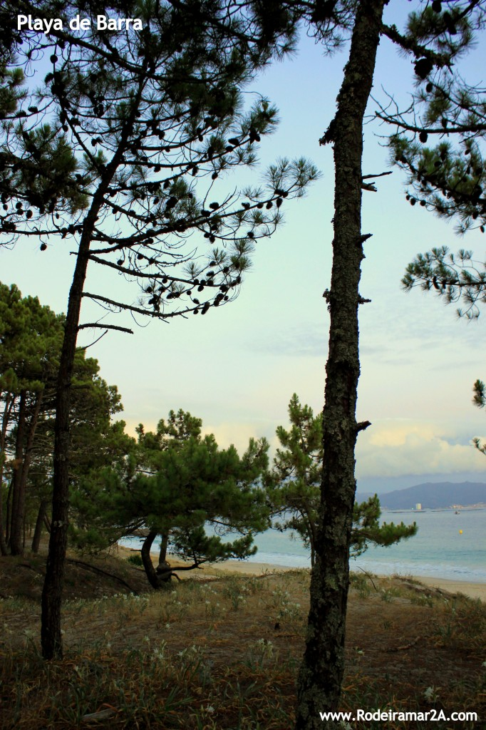 Playa de Barra. Bajada a la playa entre pinos y dunas