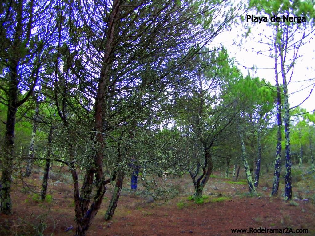 Playa de Nerga. Espacion protegido en la Red Natura 2000