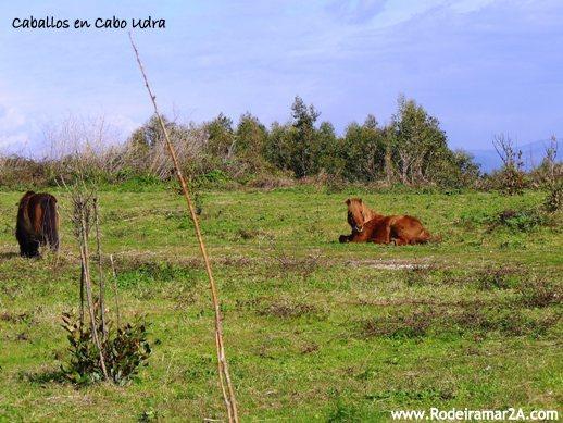 Caballos en Cabo Udra - CABO UDRA. Ruta de senderismo por Bueu, Rías Baixas.