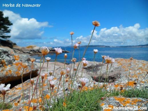 Senderismo en Cabo Udra. Herba de namorar. vistas de la Ría de Pontevedra desde Cabo Udra, Península del Morrazo en las Rias baixas