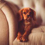 Apartamentos que admiten mascotas y consejos para la experiencia