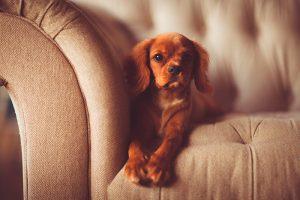 Consejos para viajar a apartamentos que admiten mascotas